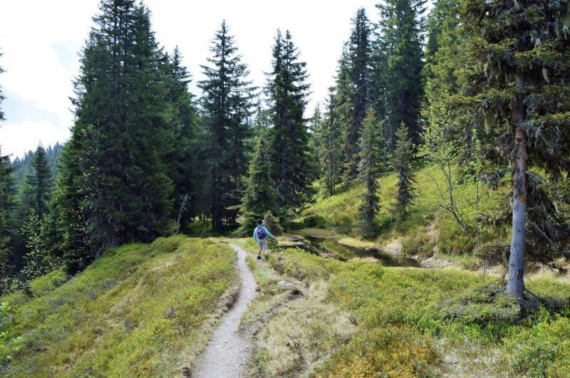 hike-hiking-in-austria-tirol-alps-kitzbueheler-alpen-wanderwege-touren-trips-tours-ways-hike